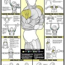 Shoulders2