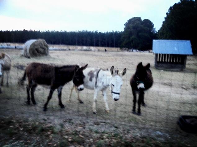 baby donkey time
