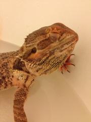 Monty taking a bath :)