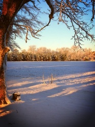 Snow Snow!