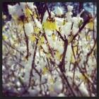 Snow flowers :)