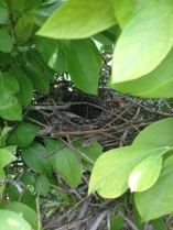 Found a bluebird nest :)